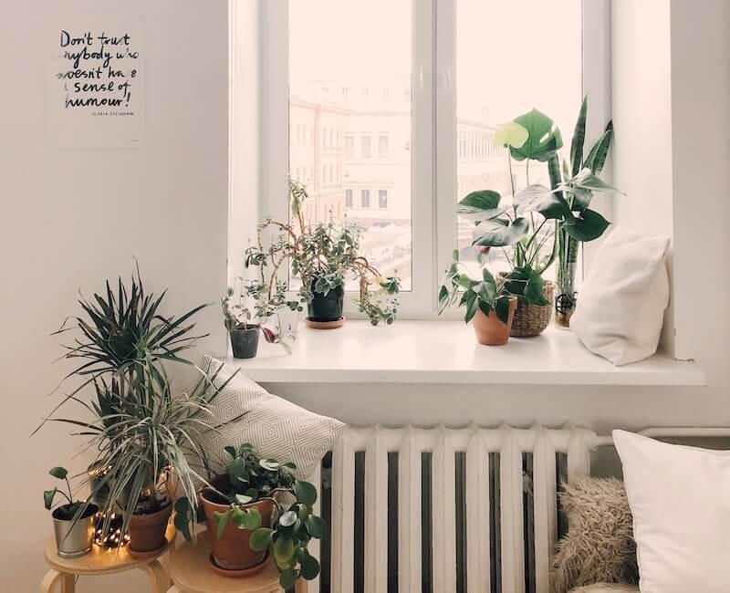 Gemütliches Fensterbrett mit Pflanzen und Kissen.